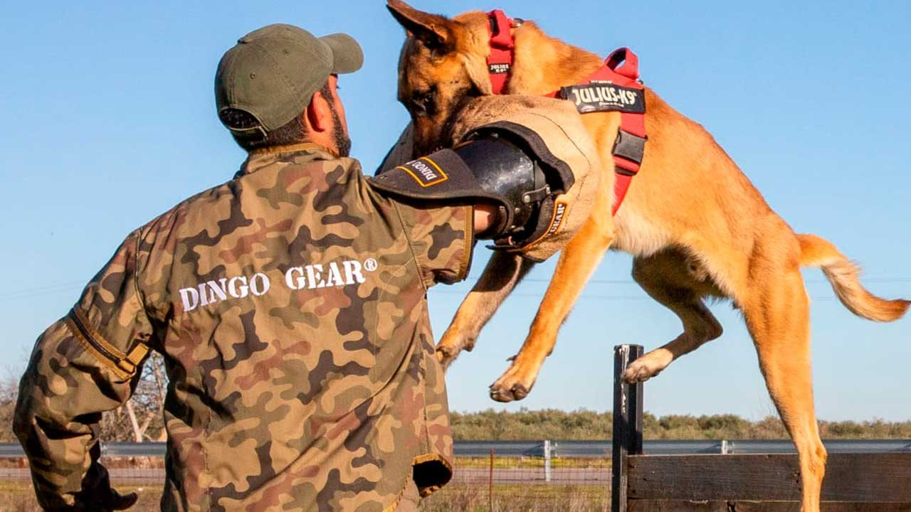 E. Kan adiestrador canino
